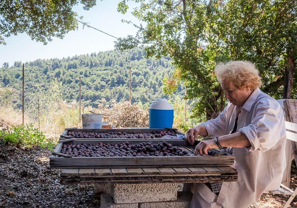 Prunes selection for Prunia Liqueur